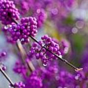 Wet Purple Poster