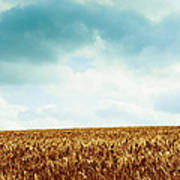 Wheatfield And Cloudy Sky Poster