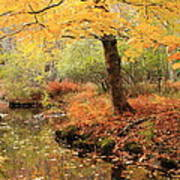 White Ash And Stream In Autumn Poster