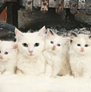 White Cats Poster