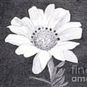 White Daisy Flower Poster