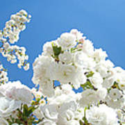 White Floral Blossoms Art Prints Spring Tree Blue Sky Poster