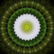 White Flower 2 Poster