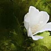 White Flower Texture Poster