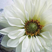 White Flower With Music Poster