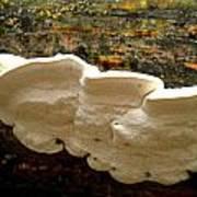 White Fungus Poster
