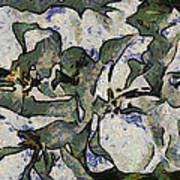 White Geraniums   -- Vangogh Poster
