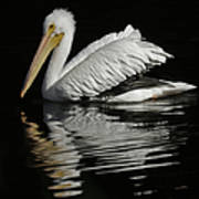 White Pelican De Poster