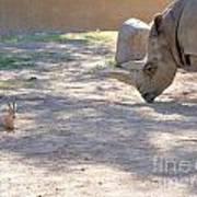 White Rhino And Ibex Poster