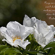 White Roses - Purge Me With Hyssop Poster
