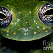 White Spotted Glass Frog Poster