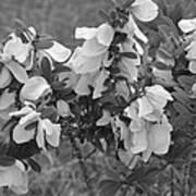 White Wild Flowers B W Poster