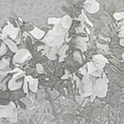 White Wild Flowers Poster