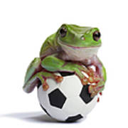 Whites Tree Frog On Small Football Poster