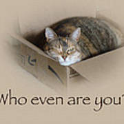 Who Even Are You - Lily The Cat Poster