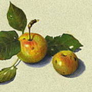 Wild Apples In Color Pencil Poster