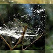 Wild Cottonwood Fibers Poster