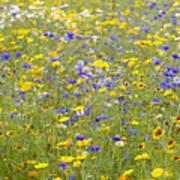 Wild Flowers In A Field Poster