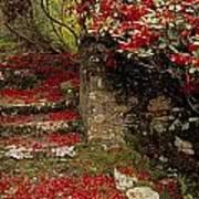 Wild Garden, Rowallane Garden, Co Down Poster