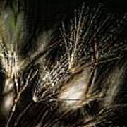 Wild Grasses Poster