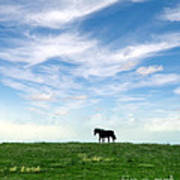 Wild Horse On Grassy Hill Poster