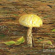 Wild Mushroom On The Forest Floor Poster