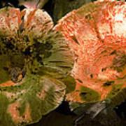 Wild Mushrooms Poster