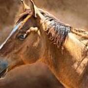 Wild Mustang Poster