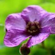 Wild Purples Poster