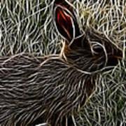 Wild Rabbit Poster