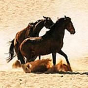 Wild Stallion Clash 3 Poster
