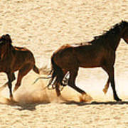 Wild Stallion Clash Poster