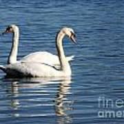 Wild Swans Poster by Sabrina L Ryan