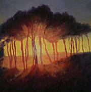Wild Trees At Sunset Poster