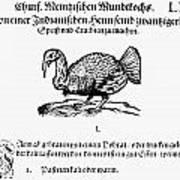 Wild Turkey, 1604 Poster