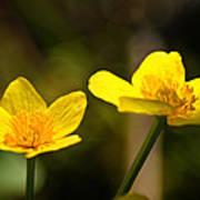Wild Yellows Poster