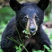 Wildflower Bear Poster