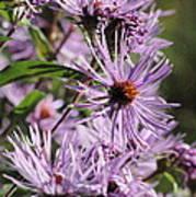 Wildflower Days Poster