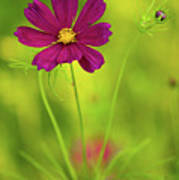 Wildflower Poster by Image by Rebecca Weaver, RWeaverNest Photography