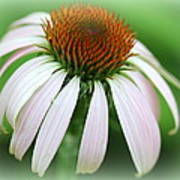 Wildflower In The Park Poster by Maureen  McDonald
