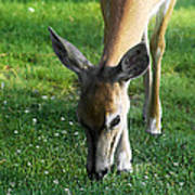 Wildlife Beauty Poster
