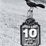 Wildlife Watching The Speed Limit Poster