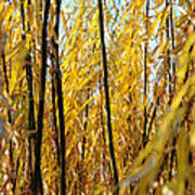 Willow Curtain Poster