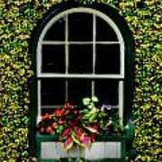 Window On An Ivy Covered Wall Poster