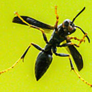 Window Wasp Poster