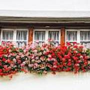 Windows With Red Flowers Poster