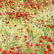 Windy Poppies Poster