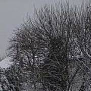 Winter Cold Branches Poster
