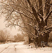 Winter Country Road Poster