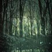 Winter Forest At Twilight Poster
